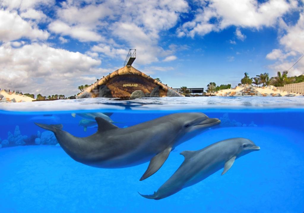 Шоу дельфинов в Aqualand