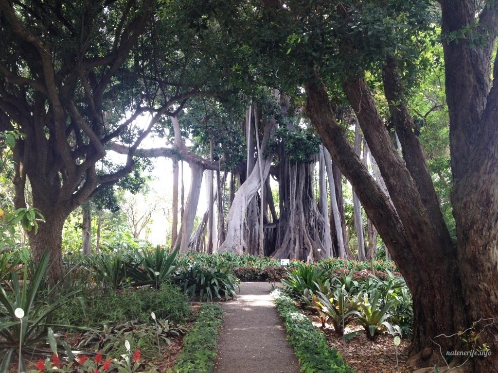 Ботанический сад, Пуэрто-де-ла-Крус