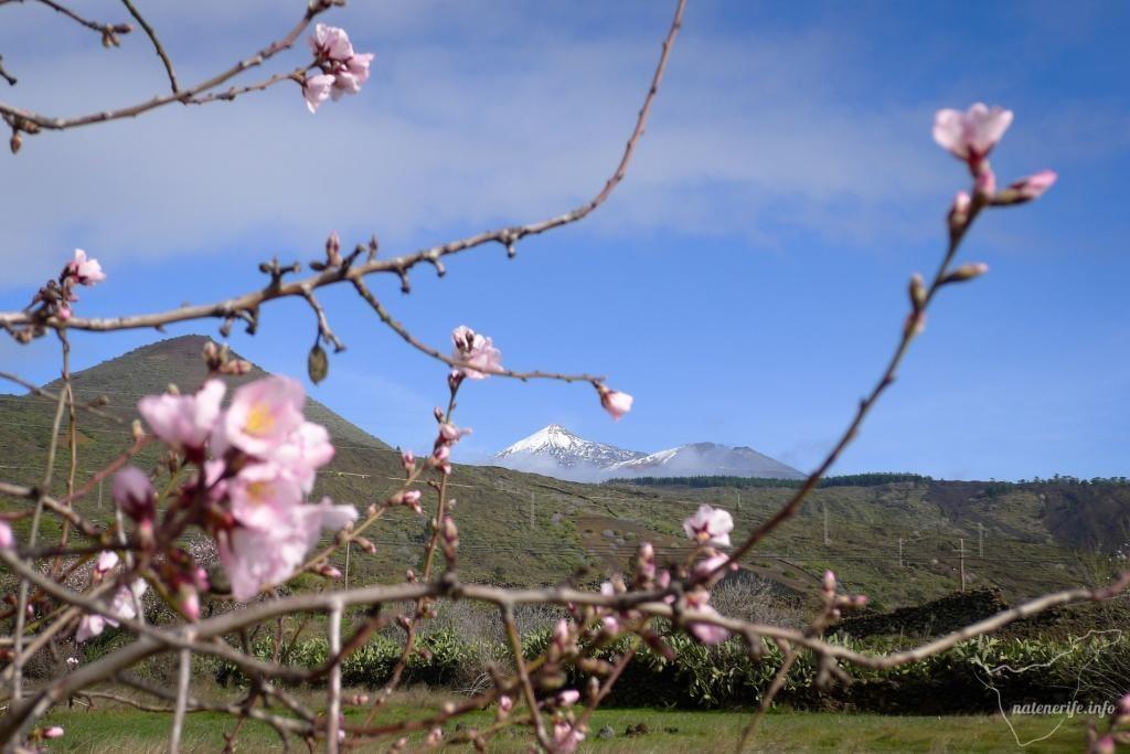 Пеший поход «Цветущий миндаль» (Ruta del Almendro en Flor XIX)