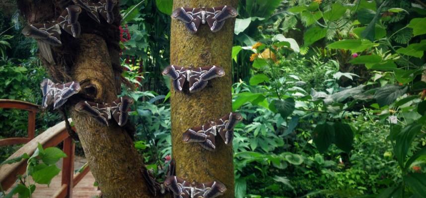 Споры вокруг Парка бабочек на Тенерифе продолжаются