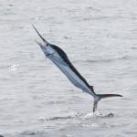 Рыбалка на Тенерифе